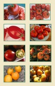 canning-tomatoes-seed-collection-sm